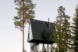 PAN-Treetop_3